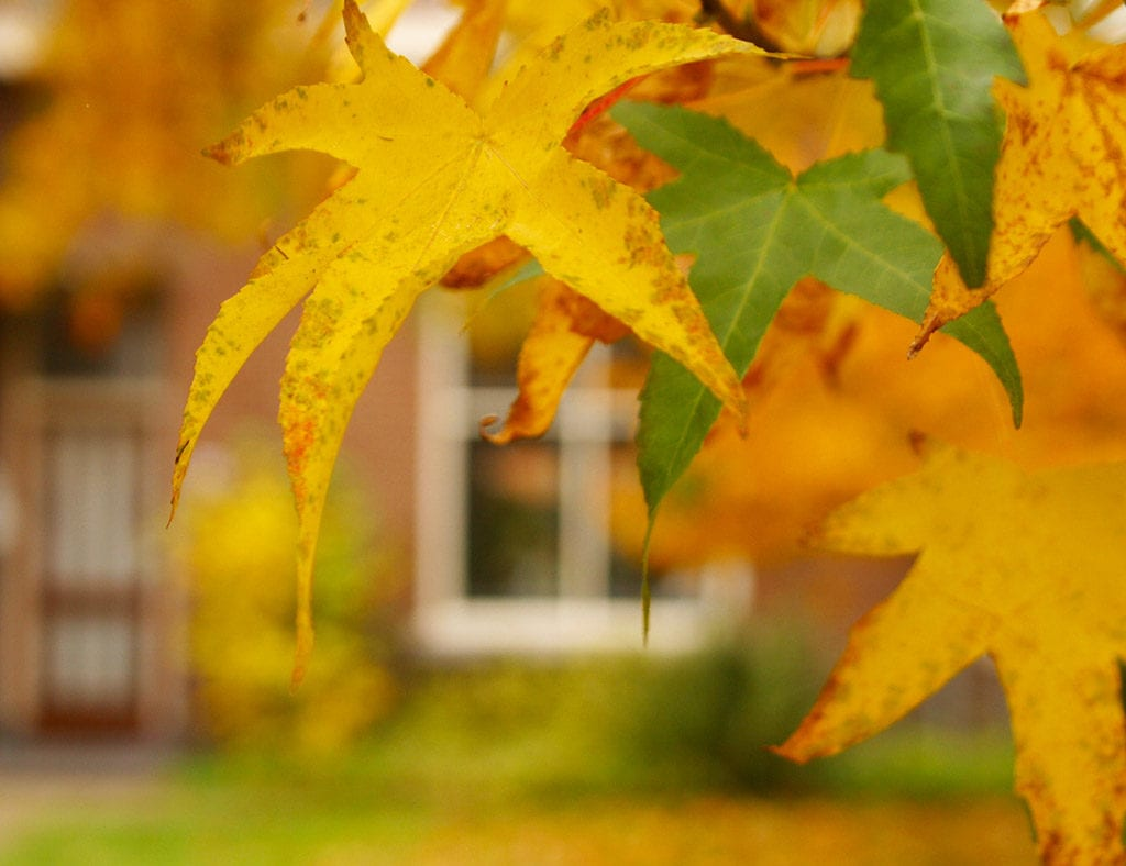 Easy fall maintenance tips for your home