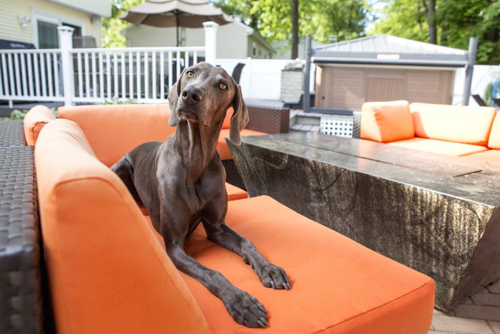 The Wayne Homes Dog Calendar Contest
